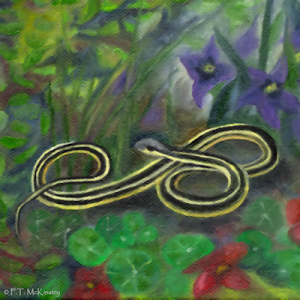 Ribbon Snake, by F.T. McKinstry