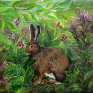 Snowshoe Hare, by F.T. McKinstry