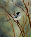 Chickadee, by F.T. McKinstry