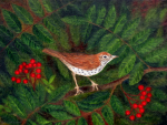 Wood Thrush in Rowan, by F.T. McKinstry