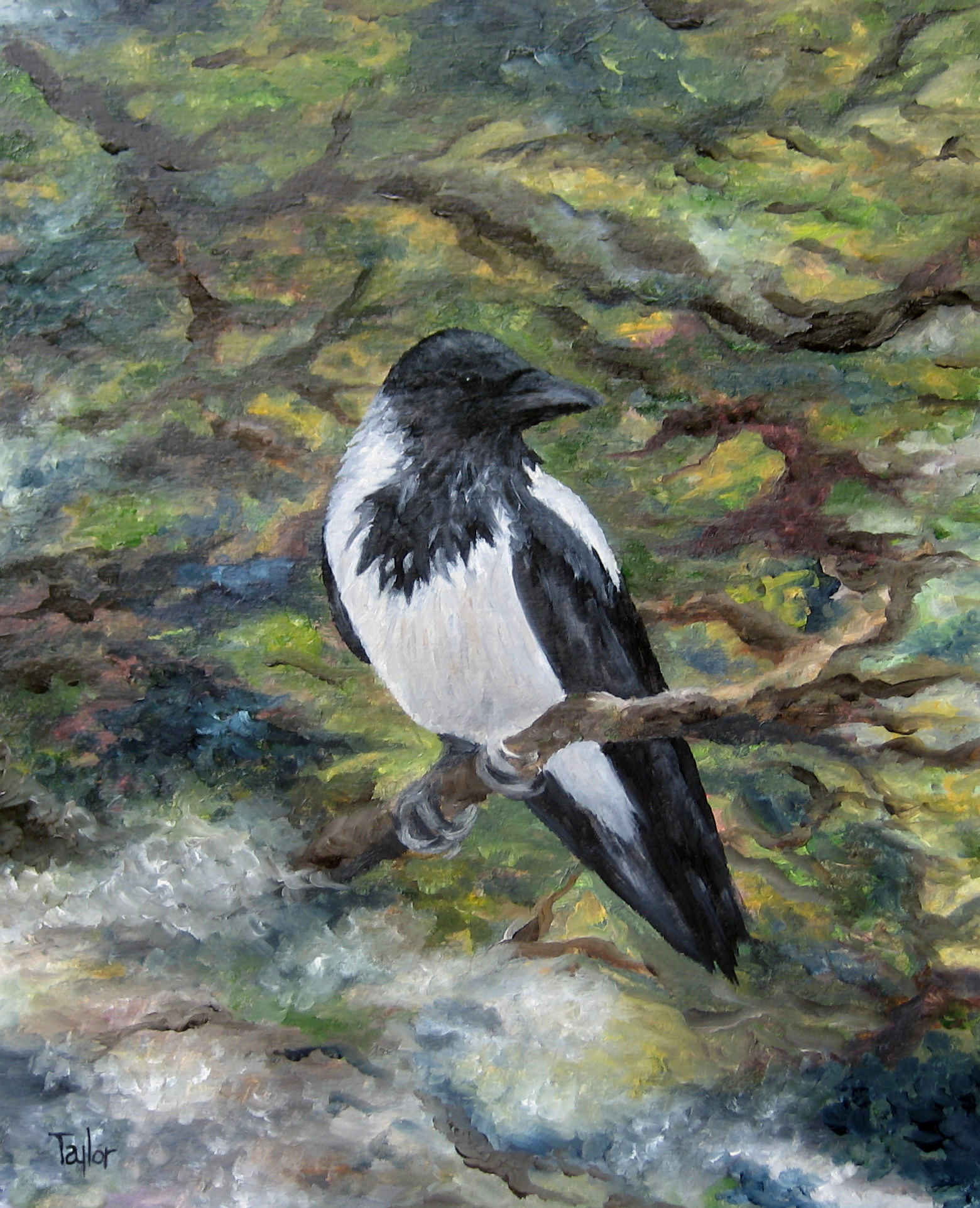 New Artwork: Hooded Crow