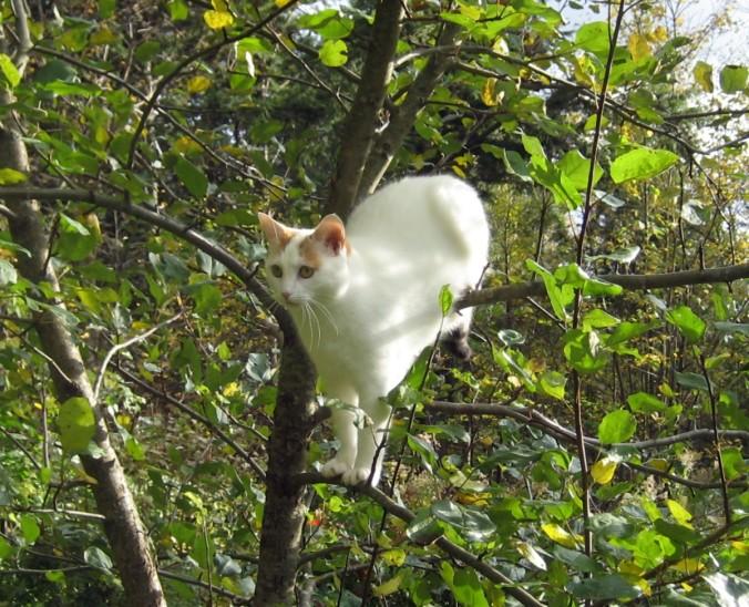 Oona in the Apple Tree