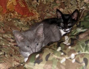 Nori and Skye Resting