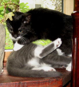 Nori and Skye Wrangling
