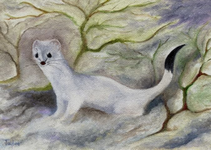 Ermine, by F.T. McKinstry