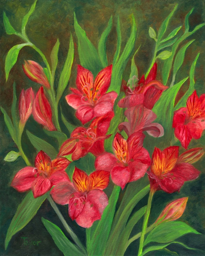 Alstroemeria, by F.T. McKinstry
