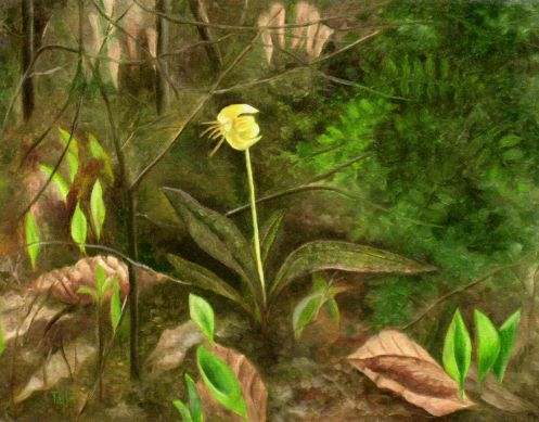 Trout Lily, by F.T. McKinstry
